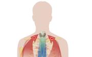 Účinky vápníku napokožku
