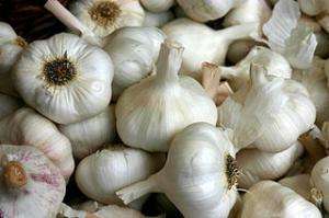 Jak pěstovat česnek