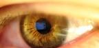 Taurin a jeho role v oční biochemii