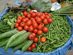 Nejlepší substrát pro zeleninovou zahradu