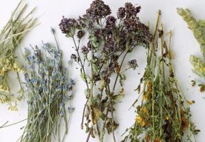 Mateřídouška a tymián – léčivky s magickou vůni