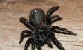 Pavouci