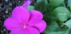 Balkónové rostliny nasever ado stínu