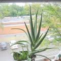 Přezimování rostlin