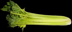 Celerová pomazánka