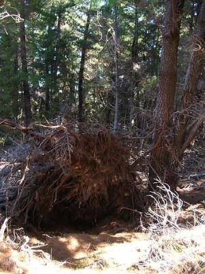 Kořenový bal
