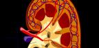 Bolest ledvin upsa