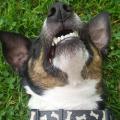 Jak vybělit zuby upsa