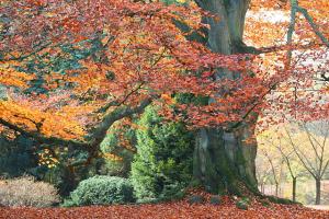 Proč napodzim žloutne aopadává listí