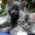 Odčervování koček