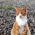 Jména pro kočky